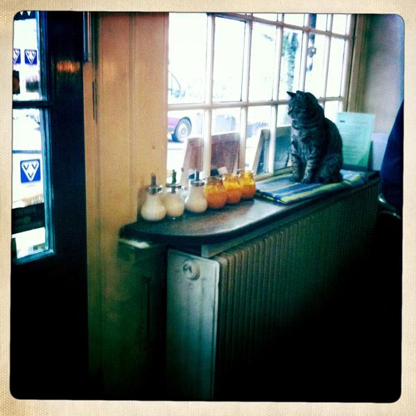 A local cat - Mancel Wanders wallpaper studio